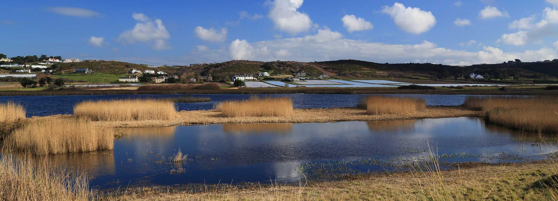 banner-wetlands